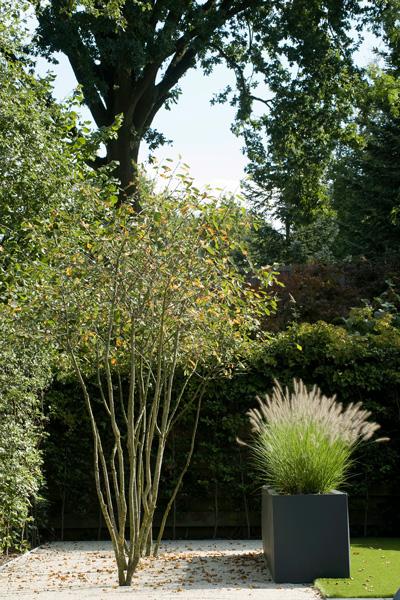 De meerstammige bomen zorgen voor een eenvoudige look.