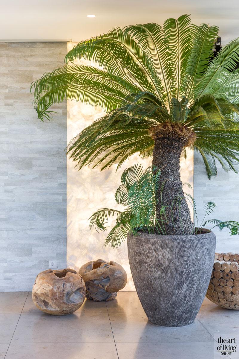 Palmboom, plant, decoratie, penthouse, Amsterdam, Osiris Hertman