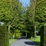 Luxe tuinrenovatie, tuindesign, tuinontwerp | Jos Bouwhuis Tuinen