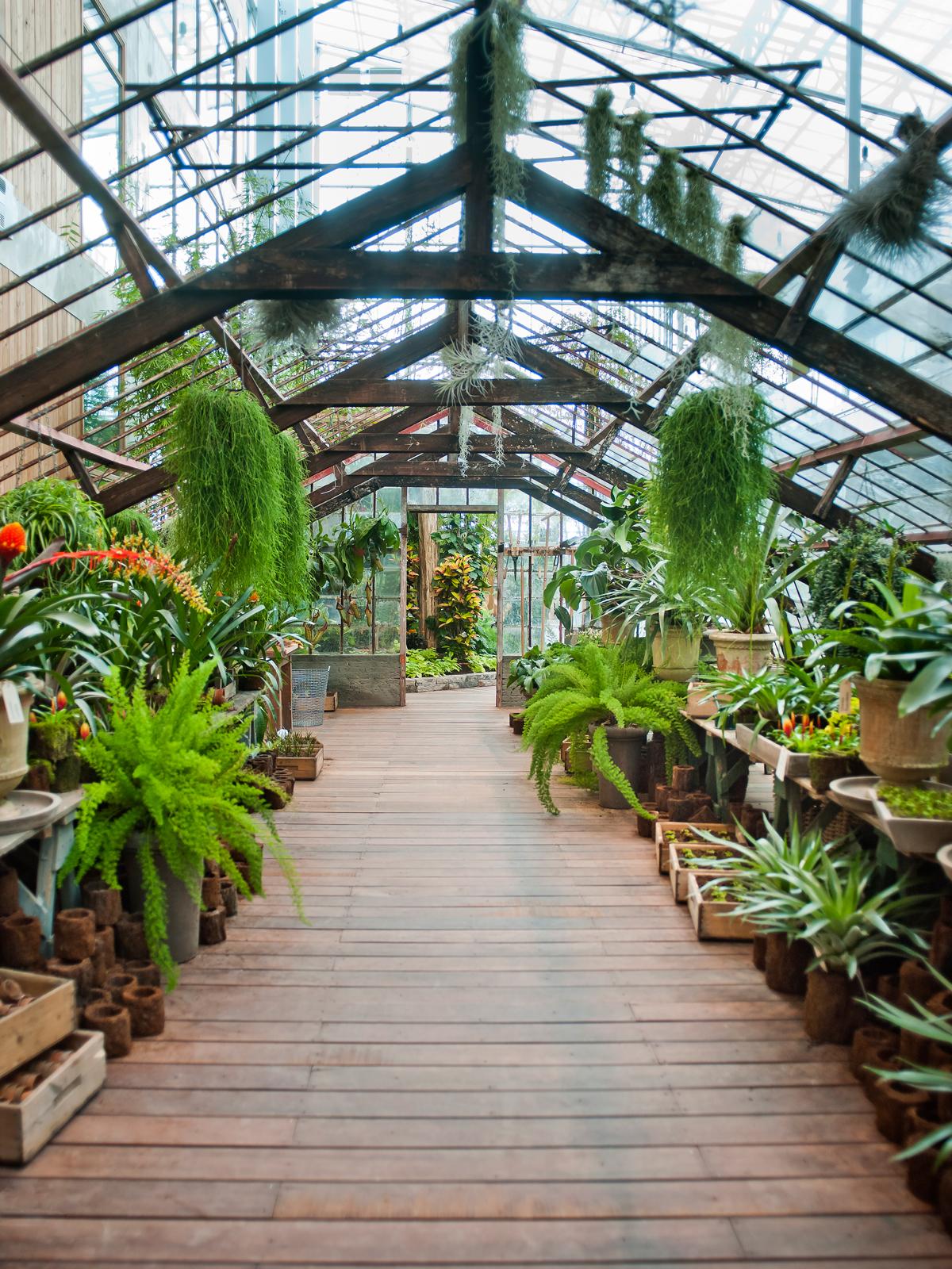 Interieur, decoratie, dossier, planten, vazen